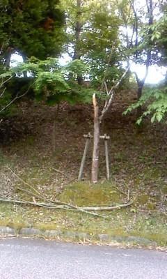 気になる木その後2 - gallery 土の詩