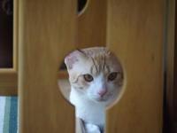 猫さん、猫背になる。 - 3色猫だんご+1