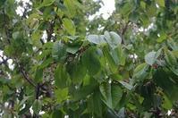 新緑の溢れる肌寒い日々 - 北緯44度の雑記帳