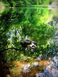 新緑の真楽寺*大沼の池の湧水 - ぴきょログ~軽井沢でぐーたら生活~