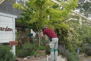 カフェミモザガーデンへ - Mimosa Garden*Diary