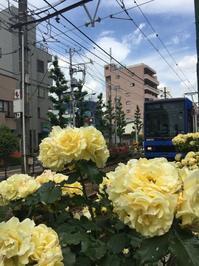 ばらバラ薔薇🌹 - たんす屋 町屋店ブログ