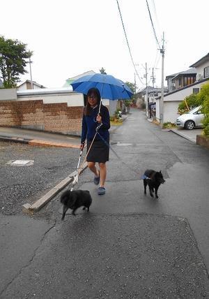 五月雨じゃ、濡れて参れ! - いぬなりワンコ日記