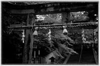 散歩長岡京-52 - Hare's Photolog