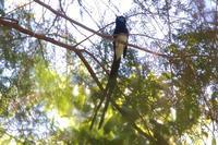 盛況 夏鳥たち - 野鳥写真日記 自分用アーカイブズ