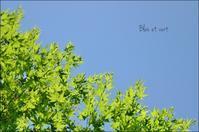 青と緑 - ハーブガーデン便り