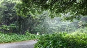 奄美喜界島(4) - フラワールームハミング♪