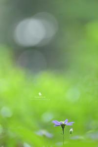 気配 - お花びより
