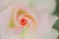 愛らしく 艶やかに - tokoのblog