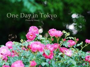 季節の変わり目の、One Day in Tokyo - Cucina ACCA