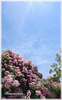 フラワーミュージアム⑧  青い空のもと・・・ - 日々楽しく ♪mon bonheur