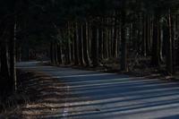 天竜スーパー林道  Apr. 2017  #002 - hama-take の blog