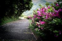 ツツジの咲く場所 - ぴんの助でございます