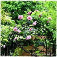 咲きました - お散歩ねこのお庭