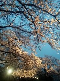 夜桜♪ - 穏やかな時間・・・