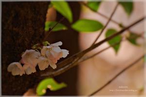 『  はじまり  の  時  』 - kotonoha