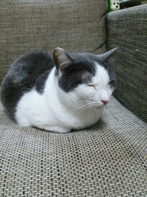 【里親決定の猫】ふうちゃん、グレコ、みゆちゃん? -