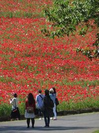 花の丘は真っ赤でした - 子猫の迷い道Ⅱ