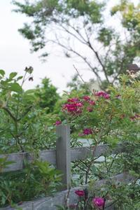 ヴィオレット - お庭のおと