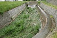 【よりみち編】天王川の増水の痕跡 - 長岡・夢いっぱい公園