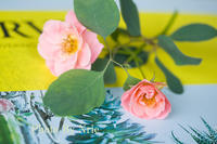 ベランダの花 - ナナイロノート