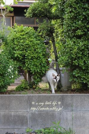 外猫マロンちゃん - a cozy little life