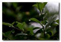 雨上がりの散歩道。 - 気まぐれフォト