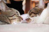 猫の顔が近すぎる・・・; - きょうだい猫と仲良し暮らし