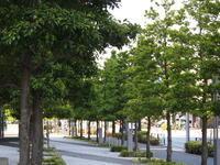 足立区の街散歩 237 - 一場の写真 / 足立区リフォーム館・頑張る会社ブログ