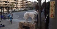 Vol.1187 松見町四丁目公園 - 小太郎の白っぽい世界