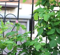 最初に咲くのは誰でしょう*久々の畑 - my small garden~sugar plum~