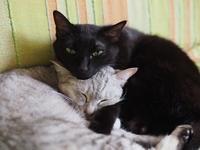 5月の猫 - azukki的.