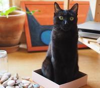 石と黒猫 - azukki的.