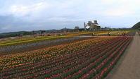 上湧別チューリップ公園 2017.5.21 - どんぐり散歩