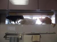 猫さん、山椒はいかがですか。 - 3色猫だんご+1