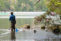 湯の湖のシャクナゲ その2・・・ - ぶらりカメラウォッチ・・