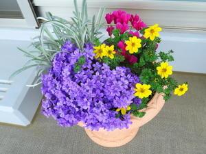 我が家の花2017年4月~5月 - ニッキーののんびり気まま暮らし