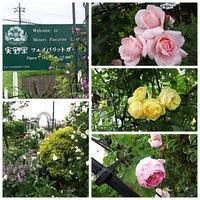 菖蒲町の実野里フェイバリットガーデン - ちくちく薔薇たいむ(*^^*)