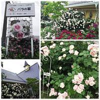 杉戸町のバラの家☆ - ちくちく薔薇たいむ(*^^*)