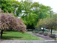 散る桜と咲くライラック - はあと・ドキドキ・らいふ