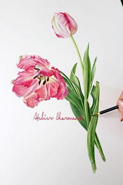 ネットギャラリー アトリエpart 1 - Atelier Charmant のボタニカル・水彩画ライフ