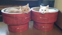 今日は、 - 猫と理子と
