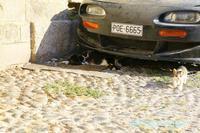 猫一家の家族写真 - ねこ旅また旅