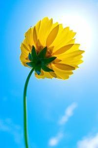 病気の予防に役立ちます! - WONDERLAND Aromatherapy Healing