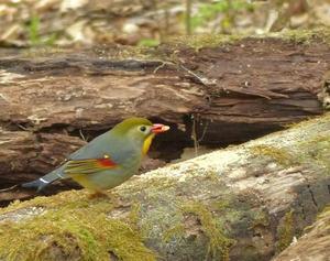夏鳥 - 多摩子の鳥見・散歩