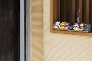 Cats - jinsnap (weblog on a snap shot)