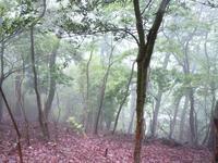 雨上がりで烟る霧の中を - 大屋地爵士のJAZZYな生活