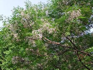 公園の四季 - ココ夏日記~ 倖せになるためのPhoto&Diary~