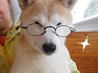 珊ちゃん和談会に参加?(5/28のテーマは「日本犬」です) - 柴と徒然日記