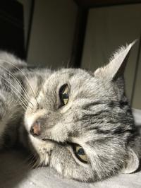 華ちゃんの鼻のヒゲ - ご機嫌元氣 猫の森公式ブログ